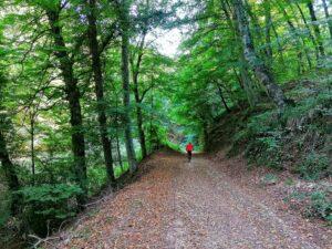 Cosa fare in foresta umbra